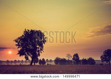 Vintage Photo Of Summer Sunrise Over Fields