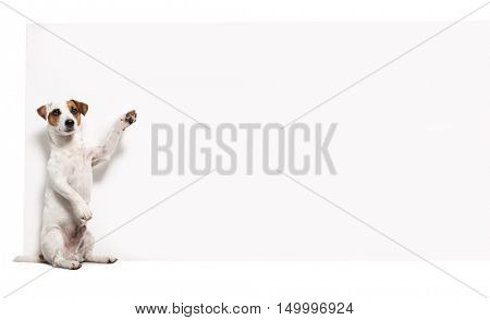 Dog with banner. Pet showing at placard. Fun animals