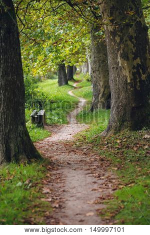 Path winding through a park