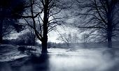 silhoutted trees in winter with mist rising in forground. poster