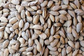 Tasty Bunch Of Almonds In Shells