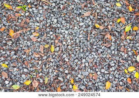 Blue Stone Driveway Gravel Mixed With Assorted Twigs And Leaves