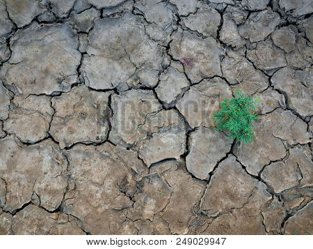 A Plant And The Parched Soil And Cracked Earth