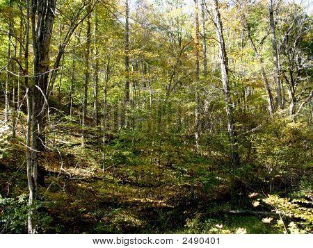 Wooded Landscape Dsc02073