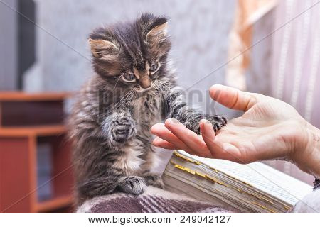 A Woman Holds A Paw Of A Little Kitten In Her Hand. The Kitten Put A Hand On The Woman's Hand. A Wom