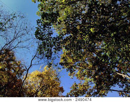 Wooded Landscape Dsc02078