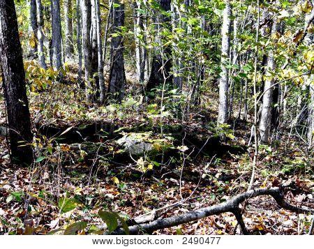 Wooded Landscape Dsc02081