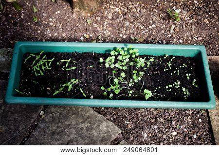 Container Gardening Ideas. Home Pot Gardening. Gardening In Pots For Beginners. Best Soil For Contai