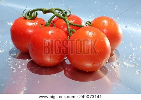 Tomato. Fresh Vine Ripened Tomato's isolated on a Silver Background with Fresh Water Drops. room for text. Fresh Beef Stake Tomato. Cherry Tomato. Farm Fresh Tomato.