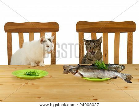Two Cats Sitting At Table