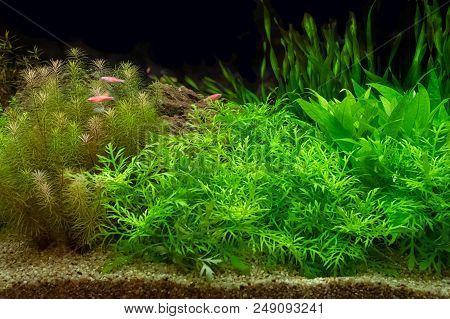 Green Beaเutiful Planted Tropical Freshwater Aquarium Background