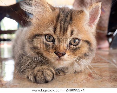 Portrait Of Beautiful Kitty Cat