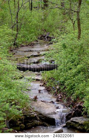 A Shallow, Slow Moving Stream Running Through Burr Oak Woods In Missouri.