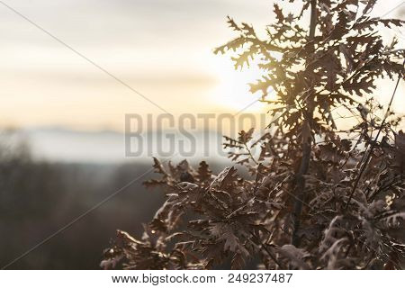 Close Up Scene Of Yule Log Tree Isolated