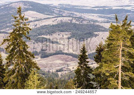 Mountain Landscape Through Conifer Tree Branches. Outdoor Landscape