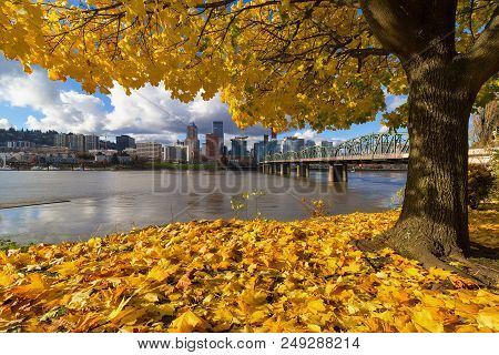 Fall Foliage Under The Maple Tree With Portland Oregon City Skyline By Hawthorne Bridge Along Willam