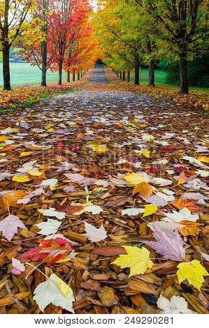 Hiking Trail At Tree-lined City Park In Oregon With Colorful Fall Foliage During Fall Season