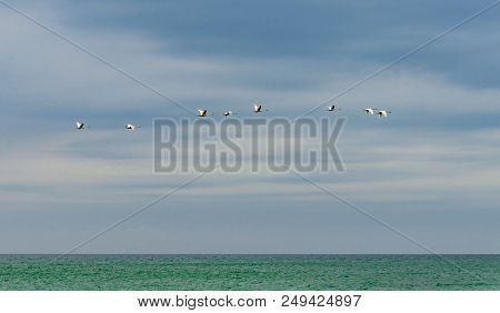 Swans Flying Over The Sea. Stock Photo.