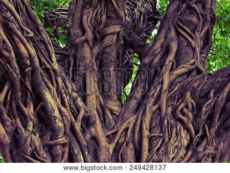 Exotic Nature, Robust Old Exotic Tree Trunk