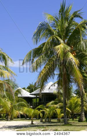 Palm Trees And Huts