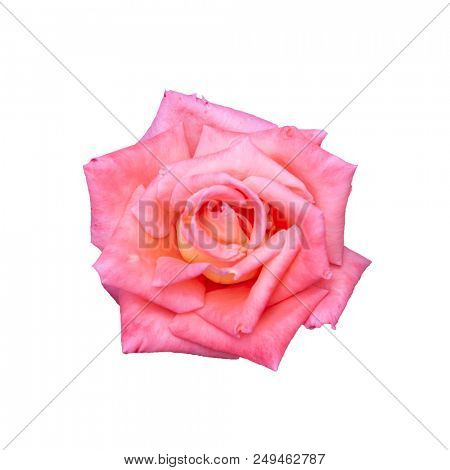 Flower head isolated on white background
