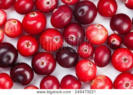 Wild Cranberry Color Variation. Red, Ripe Cranberries Macro View. Up View.