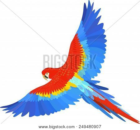 Ara Macaw Parrot Spread Wings Raster On White Background