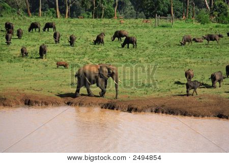 Wildlife at a Treetops waterhole Kenya Africa poster