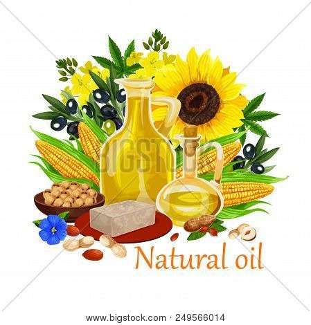 Natural Oil Made Of Sunflower Seeds, Olive And Corn, Peanuts And Rapeseed, Linseed. Vector Types Of