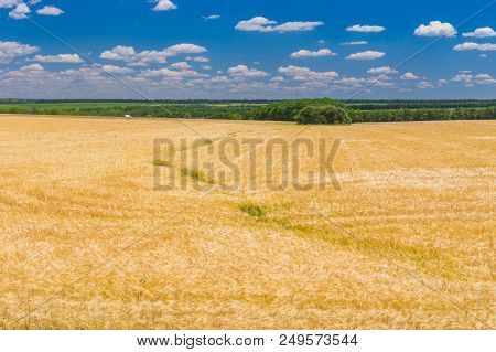 Classic Summer Landscape With Ripe Wheat Field And Blue, Cloudy Sky In Central Ukraine