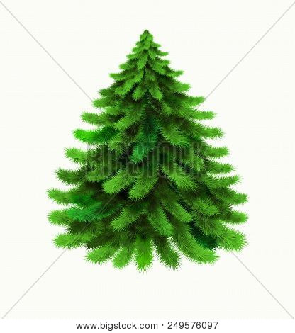 Christmas Tree Vector Isolated On White Background. Winter, Xmas Design Element. Realistic Vector Ic