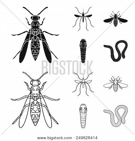 Worm, Centipede, Wasp, Bee, Hornet .insects Set Collection Icons In Black, Outline Style Vector Symb