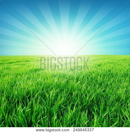 Green Field And Sun In Blue Sky