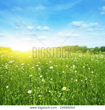 Flower field,blue sky and sunlight.