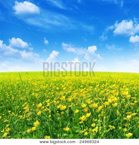 Frühling Blumenfeld und blauer Himmel.