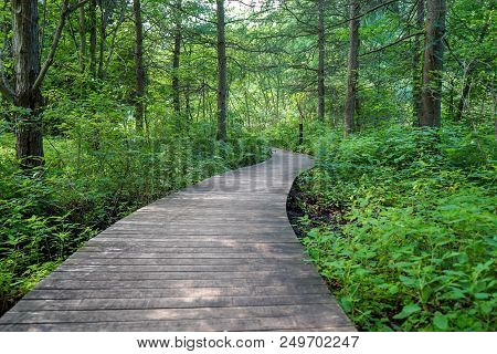 Beautiful Wood Path In The Deep Green Woods In Minnesota