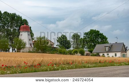 Red Poppies On The Edge Of A Yellow Wheat Field. Scandinavian Pastoral Landscape. A Stock Photo.