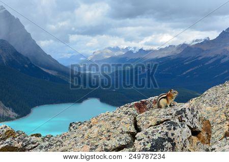 Peyto Lake Squirrel On Rocks 3
