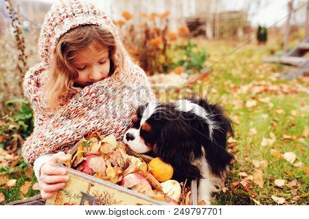 Happy Kid Girl With Basket Of Apples  Playing With Her Cavalier King Charles Spaniel Dog In Autumn,