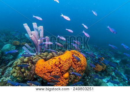 Coral Reef In Carbiiean Sea Off The Coast Of Bonaire