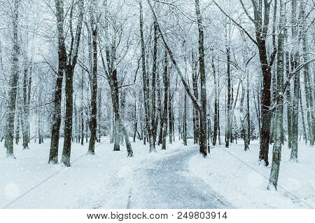 Winter Forest Landscape With Snowy Winter Trees Along The Winter Park - Winter Snowy Forest Scene In