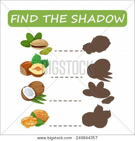 Find The Right Shade Nuts. Set To Find The Right Shadow Matching Educational Baby Game To Compare An