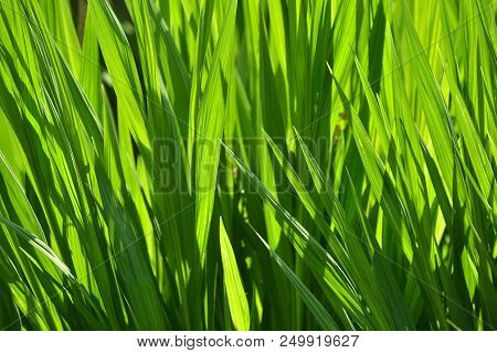Green Fronds Of Plants In A Garden