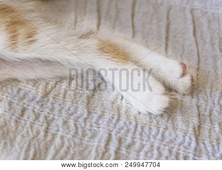Cats Leg Fragment Photo, Legs Of Little Kitten Close Up  Isolated In Bright Background, Artistic Pho