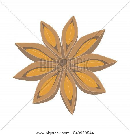 Vector Anise Illustration Isolated In Cartoon Style. Herbs And Species Series