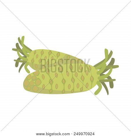 Vector Wasabi Illustration Isolated In Cartoon Style. Herbs And Species Series