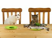 Two cats sitting at table with one plate with fisch poster