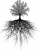 Editable vector illustration of a tree and its roots poster