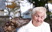 Senior lady with brindle greyhound in backyard poster