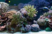 Underwater life, Fish, coral reef in ocean poster